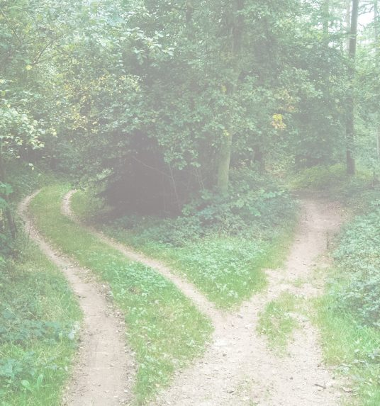 Two paths in a forest, symbolizing the paths families can take when deciding on a home for their love one